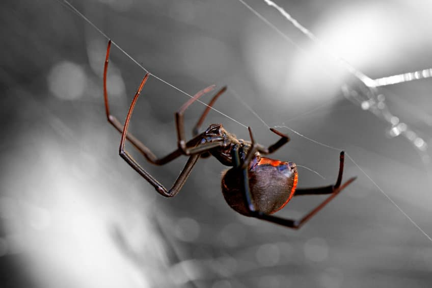 How Bad Are the Spiders in Temecula? A Temecula Pest Control Company Answers (Knockout Pest Control)